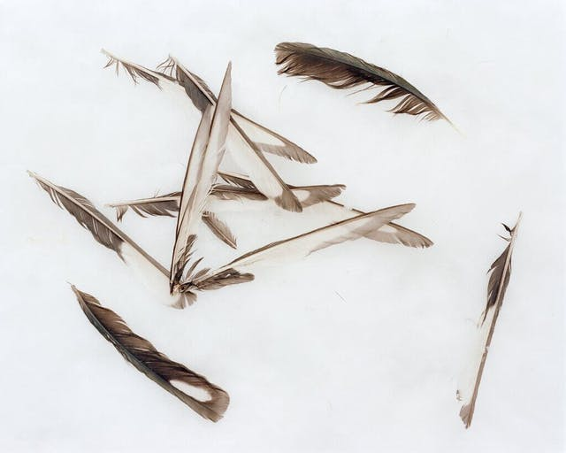 Feathers atop the snow in Piatra Craiului National Park
